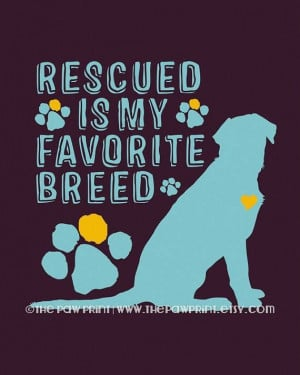 Didn't Rescue My Dog. My Dog Rescued Me.