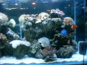 Marine Plants For Aquariums