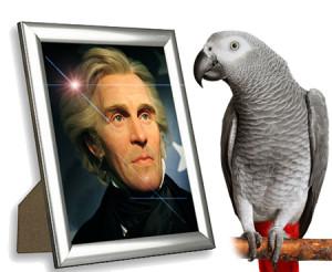 andrew-jackson-pet-parrot-poll.jpg