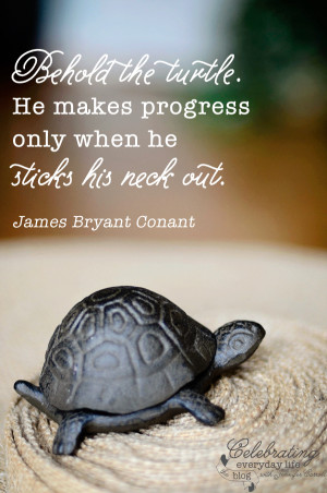 ... Turtle quote, be brave quote, inspirational quote, motivational quote