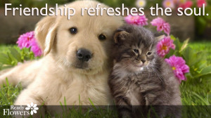 Cute kitten, puppy and flowers with friend quote.