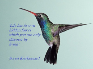 hummingbird quote soren