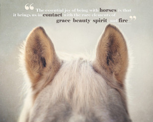 Horse Art, Horse Photography, Horse Quotes, Joy of Horses, Horse Ears ...