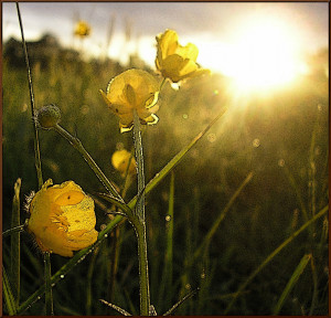 Fading Gold Flowers
