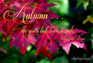 Autumn Quote HD Wallpaper 13