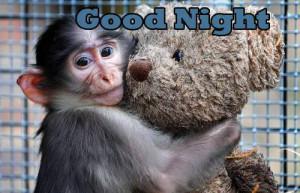 day english funny funny animals funny monkey good night