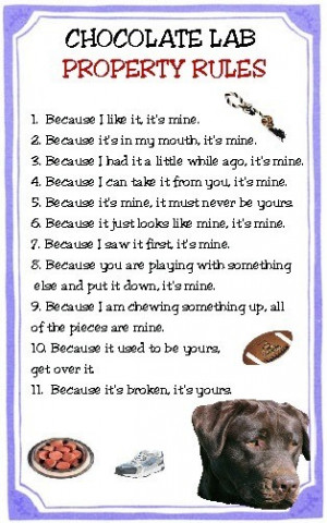Chocolate Lab Property Rules