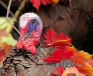 Thanksgiving quotes, funny jokes, Thanksgiving one-liners for Turkey ...