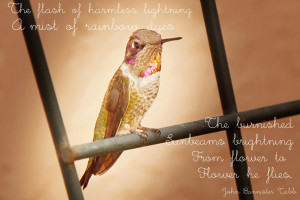 The hummingbird font is entitled