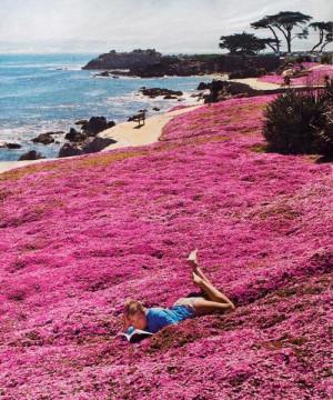 Great Monterey California Activities (and Eats)