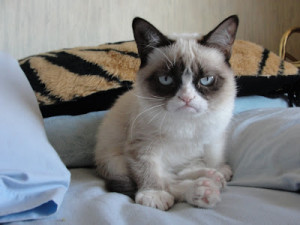 Grumpy Cat Good Morning on the bed