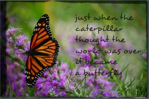 butterfly quotes Pictures, Images and Photos