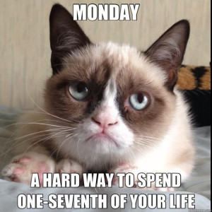Showing Gallery For Happy Monday Cat Meme