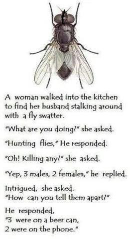 ... : Funny Jokes // Tags: Funny joke - Fly in kitchen // April, 2013