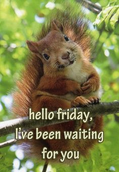 Hello Friday, I've been waiting for you! (Squirrel) More