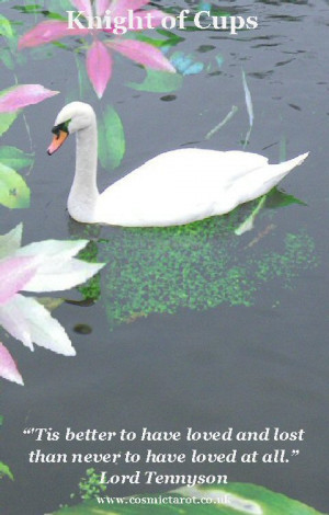 the knight of cups is represented by a swan swans are elegant birds ...