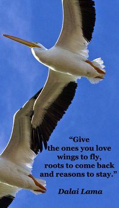 "to stay."" Dalai Lama -- On FMcGinn image of pelicans in flight ..."