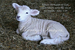 Behold the Lamb of God quote