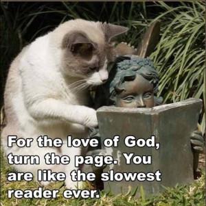 funny-animal-captions-cat-reading