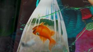 Darla Finding Nemo Quotes