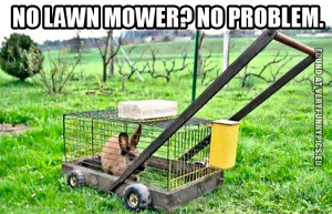 Funny Picture - No lawn mower? No problem