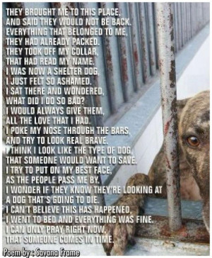 In shelters, you may be looking at a dog who's about to die. save a ...