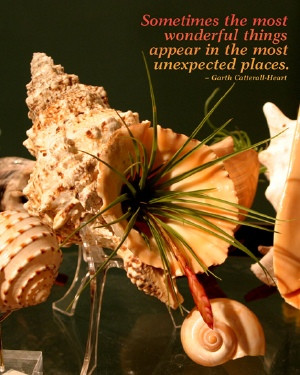Sea Shell and Air Plant with Quote