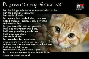 Easier said than done - this foster mom is what they call a foster ...