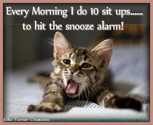 funny cat pic n quote