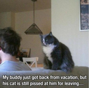 Mad Cat Pictures Funny