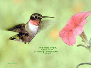 Love Birds Quotes Wallpaper : Birdhouse Quotes About Life. QuotesGram