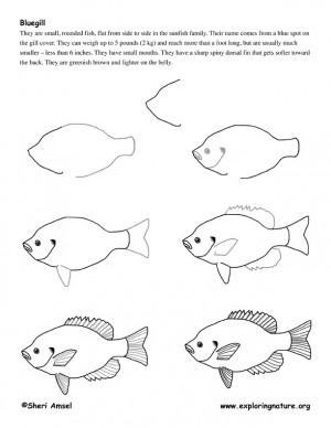 Draw ocean animals Draw ocean animals