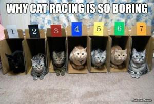 Why cat racing is sooo boring