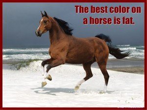 The air of heaven is that which blows between a horse's ears.