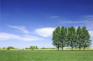 odnawialne źródła energii chce inwestować gmina Lubin, która ...