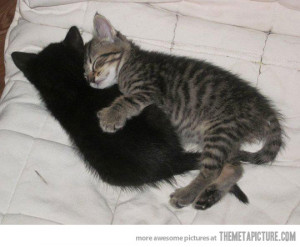 Funny photos funny cats sleeping together