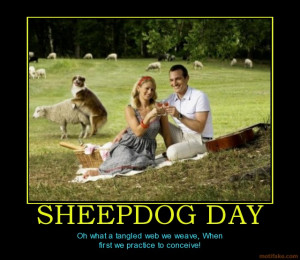 Sheepdog Day What Tangled Web...