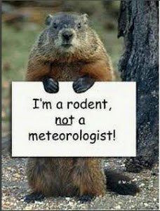 Rodent Not A Weatherman