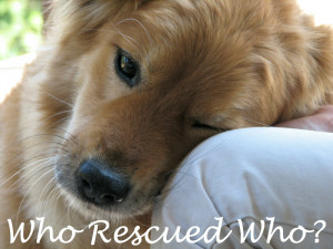 Inspirational Rescue Dog Quotes