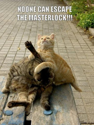 Home Funny Pictures Cats Fighting