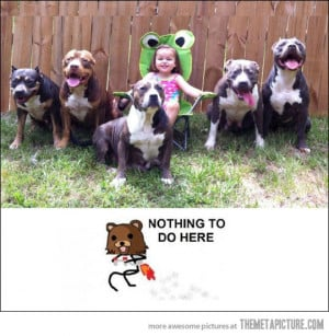 Funny photos funny little girl big dogs