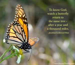 To know God, watch a butterfly return to the same tree -