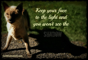 Tag Archives: quotes-cats-shadow-light-optimism