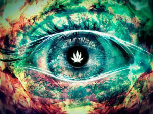 Today's Recommended Reading For Stoners post, making sure you are ...