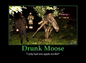 Moose-funny drunk-picture-elk