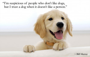 ... dog-doesnt-like-a-person-bill-murray-daily-quotes-sayings-pictures.png
