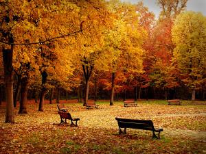 Autumn Full Of Music