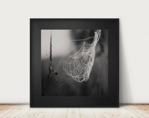 spiders web photograph, winter, rus tic, morning frost, dew, black and ...