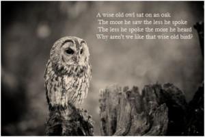inspiration # inspirational # owl # beauty # wildlife # scenery ...