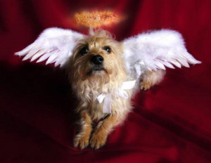 Angel Dog Halloween